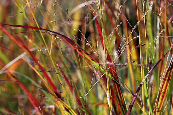 Shenandoah Grass At Citygarden Art | Moore Design Group