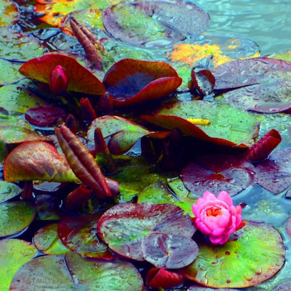 Just One Lilie Art | KAT MILLER-PHOTO ARTIST