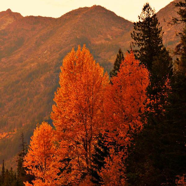 Orange Of Fall Photography Art | KAT MILLER-PHOTO ARTIST