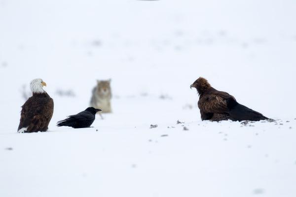 Wildlife | Robbie George Photography