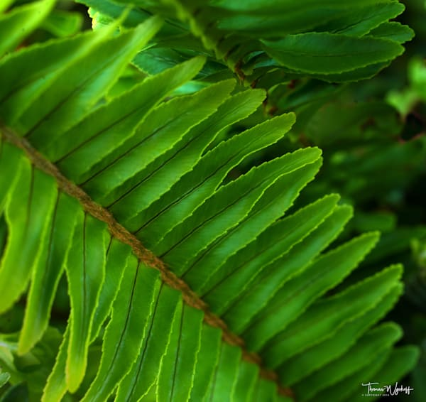 Green Fern - Photographs of the Prairie by Thomas Wyckoff