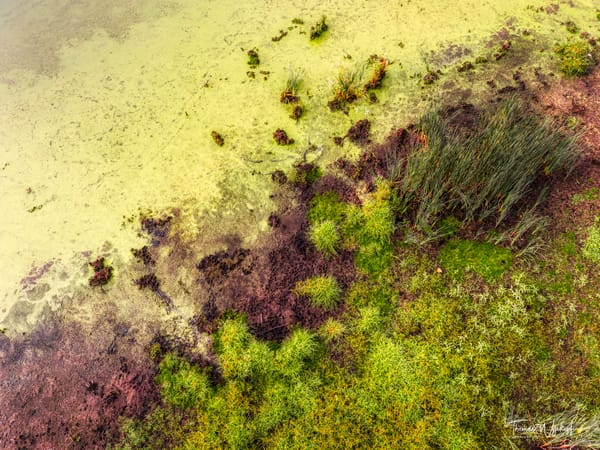 Edge of the Marsh - Abstract aerial photography by Thomas Wyckoff