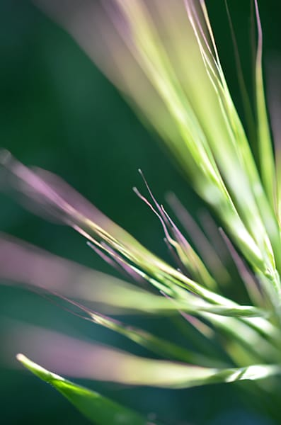 Electricgrass1 Photography Art | LIGHT POETRY PHOTOS