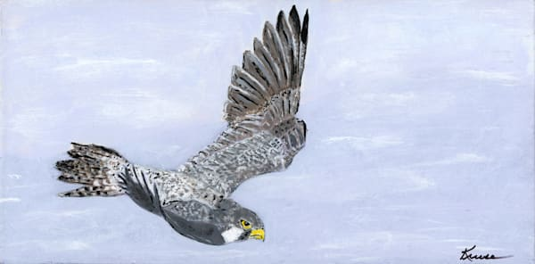 Robyn Kruse - Peregrine on the Hunt