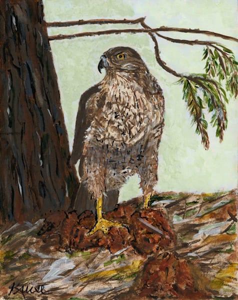 Robyn Kruse - Cooper's Hawk