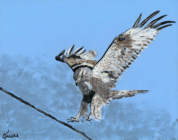 Robyn Kruse - Rough Legged Hawk