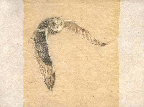 Robyn Kruse - Short Earred Owl at Twilight