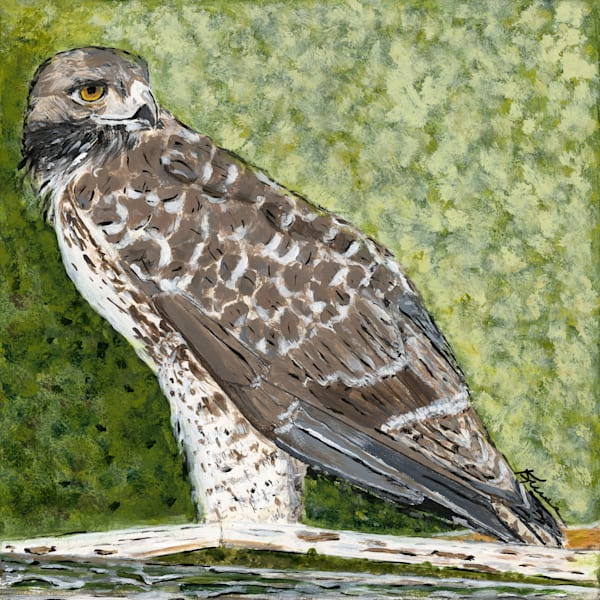 Robyn Kruse - Young Red Tail