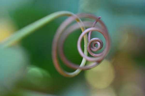 Tendrilspiral Photography Art | LIGHT POETRY PHOTOS