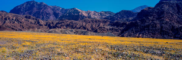 Super Bloom Pan Photography Art | Craig Primas Photography
