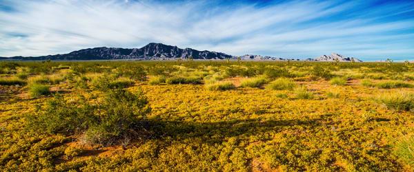 Mormon Mesa Photography Art | Craig Primas Photography