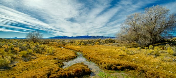 Mallard Meadows Headwaters Photography Art | Craig Primas Photography