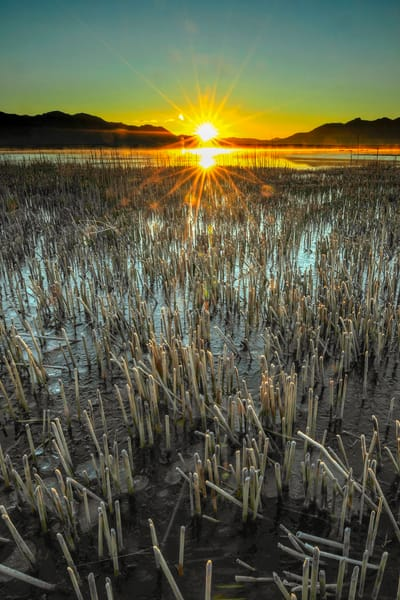 Adam's Mc Gill Sunrise  Photography Art   Craig Primas Photography