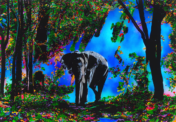 The Blessing | Elephant Art | JD Shultz Art