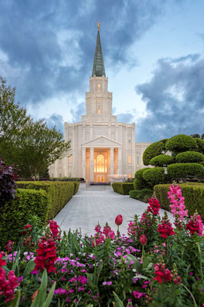 Houston Temple - Spring Tulips