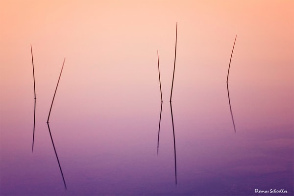 Minimalist Photo Art Prints | Meditative Pond Reeds from Acadia National Park