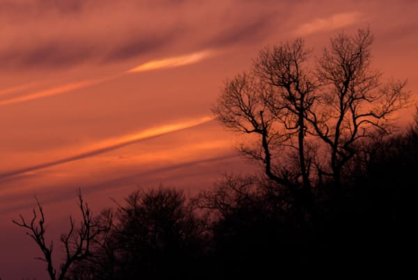 Trees At Sunset Photography Art | Drew Campbell Photography