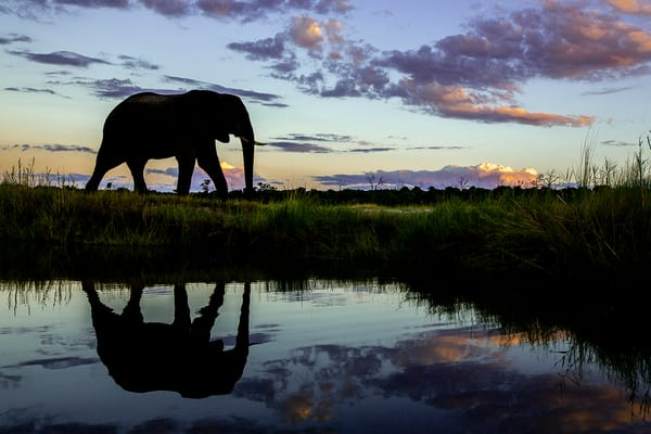 Sunset Reflections in Africa