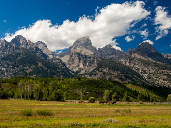 Teton Horses Photography Art | Craig Primas Photography