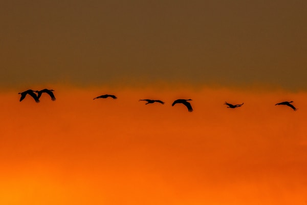 Amber Flight Photography Art | Craig Primas Photography