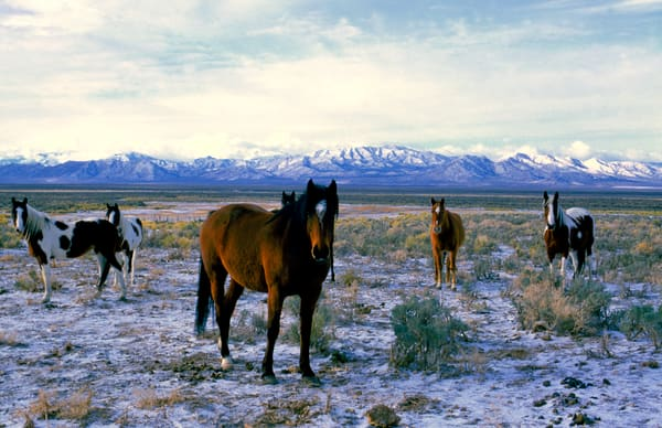 White River Wild Horses Photography Art by craigprimas