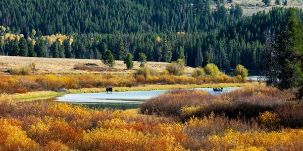 Oxbow Moose And Canoe Photography Art | Craig Primas Photography