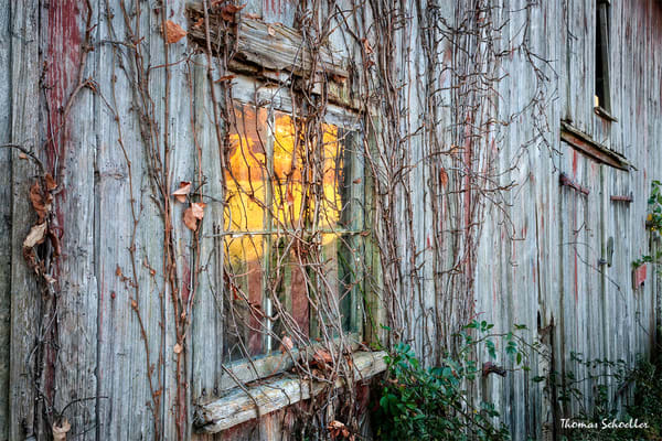 Autumn Reflections off a Vintage New England Style Barns lead glass window as Photo Art