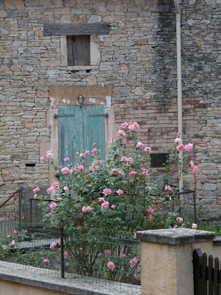 Dscn7582 Roses2 Art | Liliedahl Art