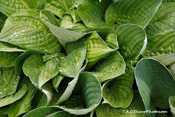 plant-4264952 copy