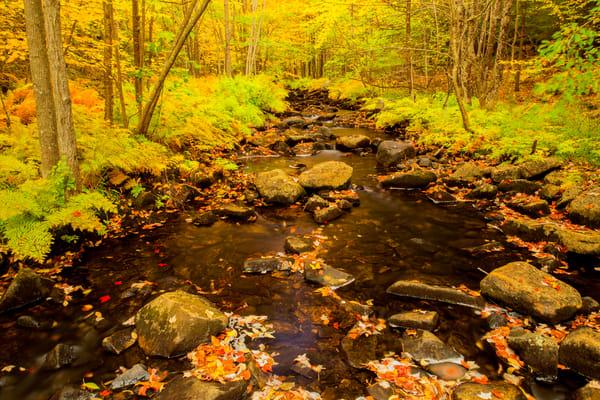 Stream Solitude Photography Art | Craig Primas Photography