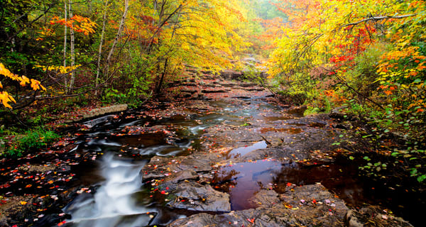 Acadia Stream In Fall Photography Art | Craig Primas Photography