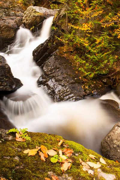 Glen Ellis Fall Leaves Photography Art | Craig Primas Photography