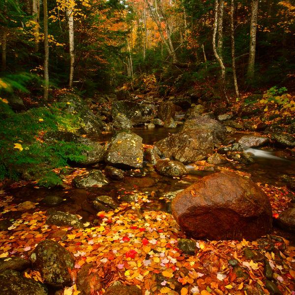 Autumn Pleasure Photography Art   Craig Primas Photography