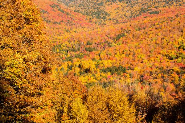 Autumn Overload Photography Art | Craig Primas Photography