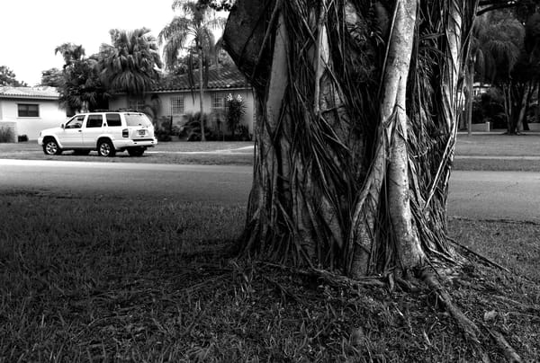 Residential Street Scene, Miami Photography Art   Peter Welch