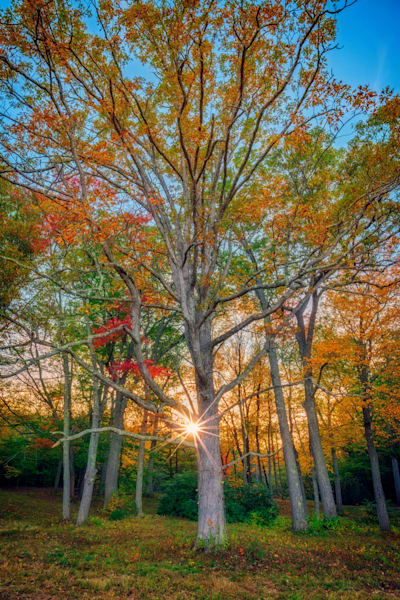 Autumn Sunset Through The Trees | Shop Photography by Rick Berk