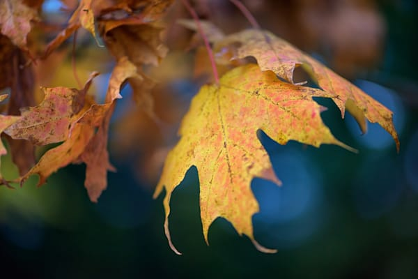 Changing Leaves | Shop Photography by Rick Berk
