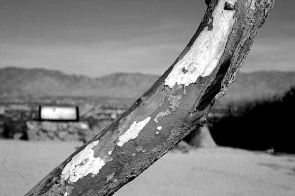 Stripped Tree Trunk Photography Art | Peter Welch