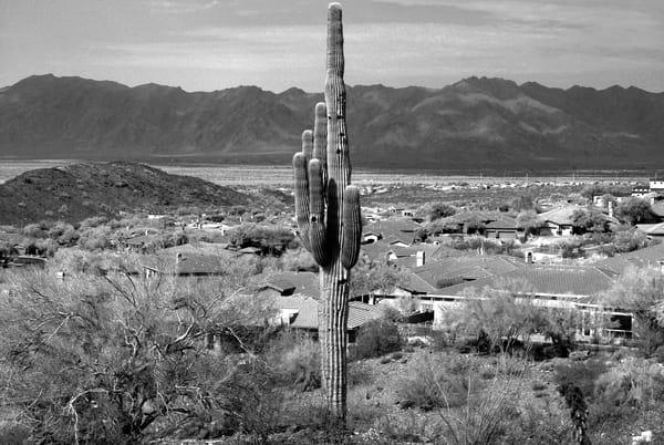 Desert Community Photography Art | Peter Welch