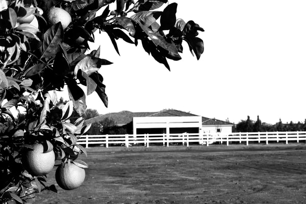 Behind The Orange Tree Photography Art | Peter Welch