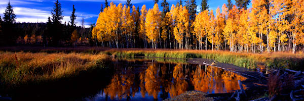 Beaver Pond Fall Photography Art | Craig Primas Photography