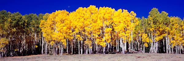 Louder Meadow Fall Photography Art | Craig Primas Photography