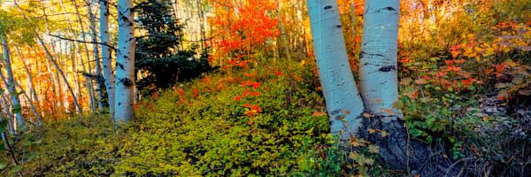 Cedar Highlands Canvas 2 Photography Art | Craig Primas Photography