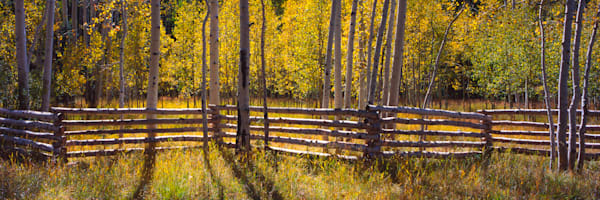 Aspen Fence Photography Art | Craig Primas Photography