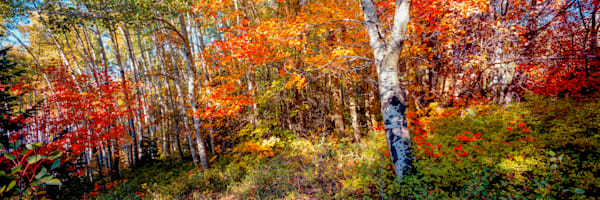 Cedar Highlands Canvas Photography Art | Craig Primas Photography