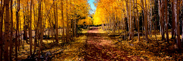 Take Me Home Country Road Photography Art   Craig Primas Photography