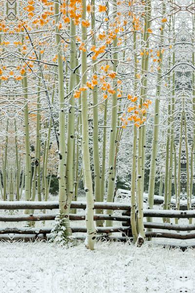 Early Winter Photography Art | Craig Primas Photography