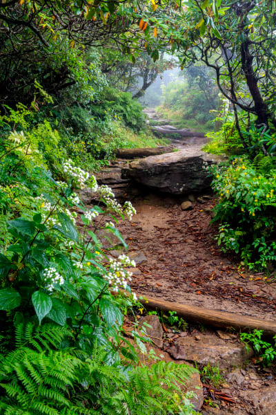 Summer Trail Art | Red Rock Photography