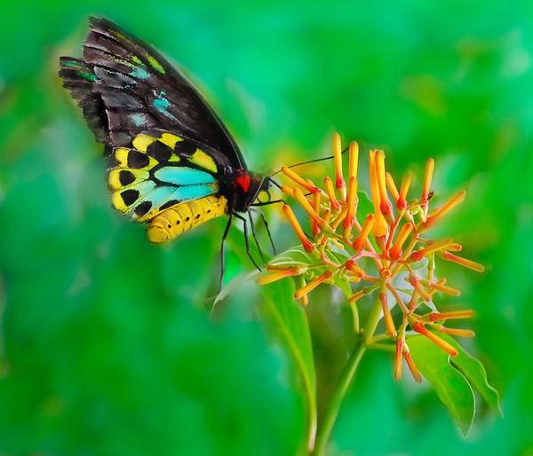 I heart Butterfly
