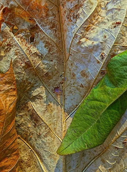 Leaf Forest|Fine Art Photography by Todd Breitling